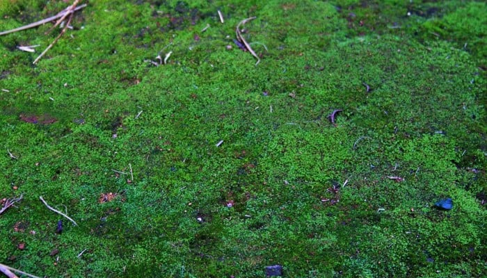 How to Get Rid of Moss from the Lawn Complete Guide