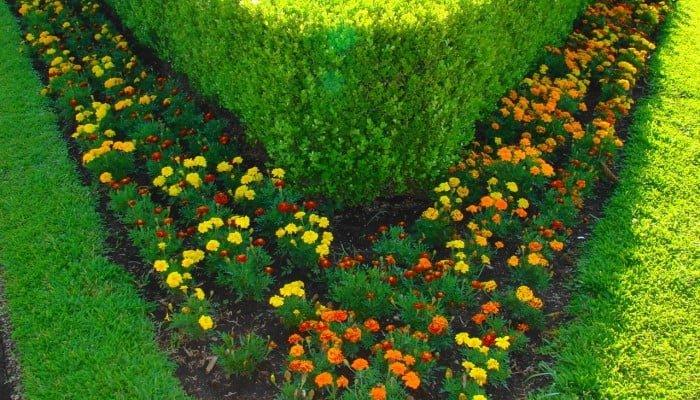 Weed Killer for Flower Beds