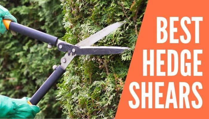 Best Hedge Shears
