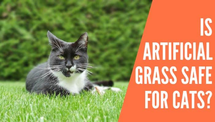Is Artificial Grass Safe For Cats