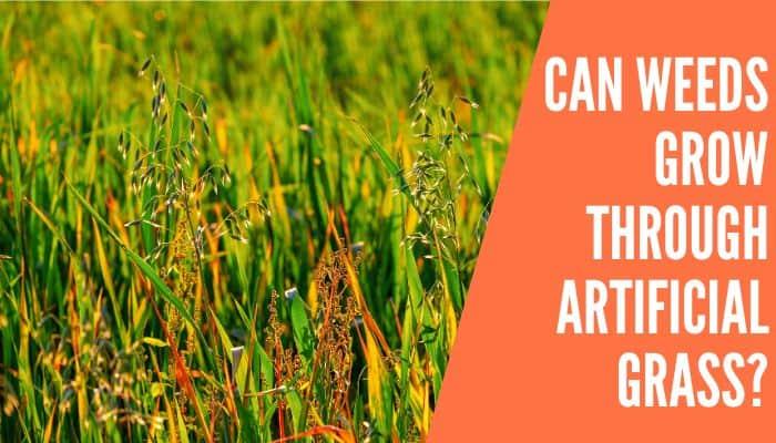 Can Weeds Grow Through Artificial Grass
