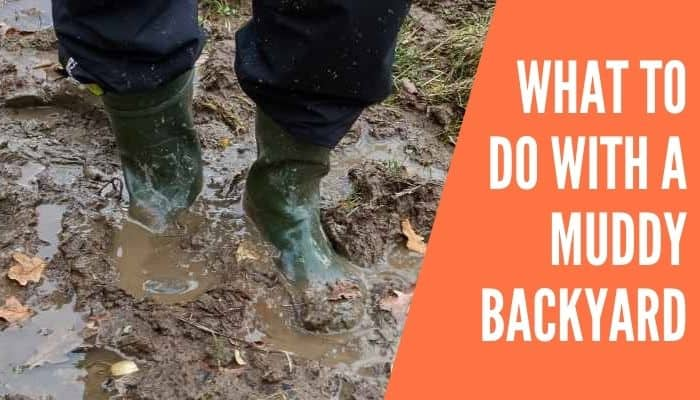 What to Do With a Muddy Backyard